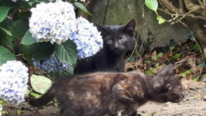 sidney%22black-kitten-%22newry-picsay