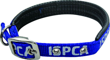 dog collar blue spca