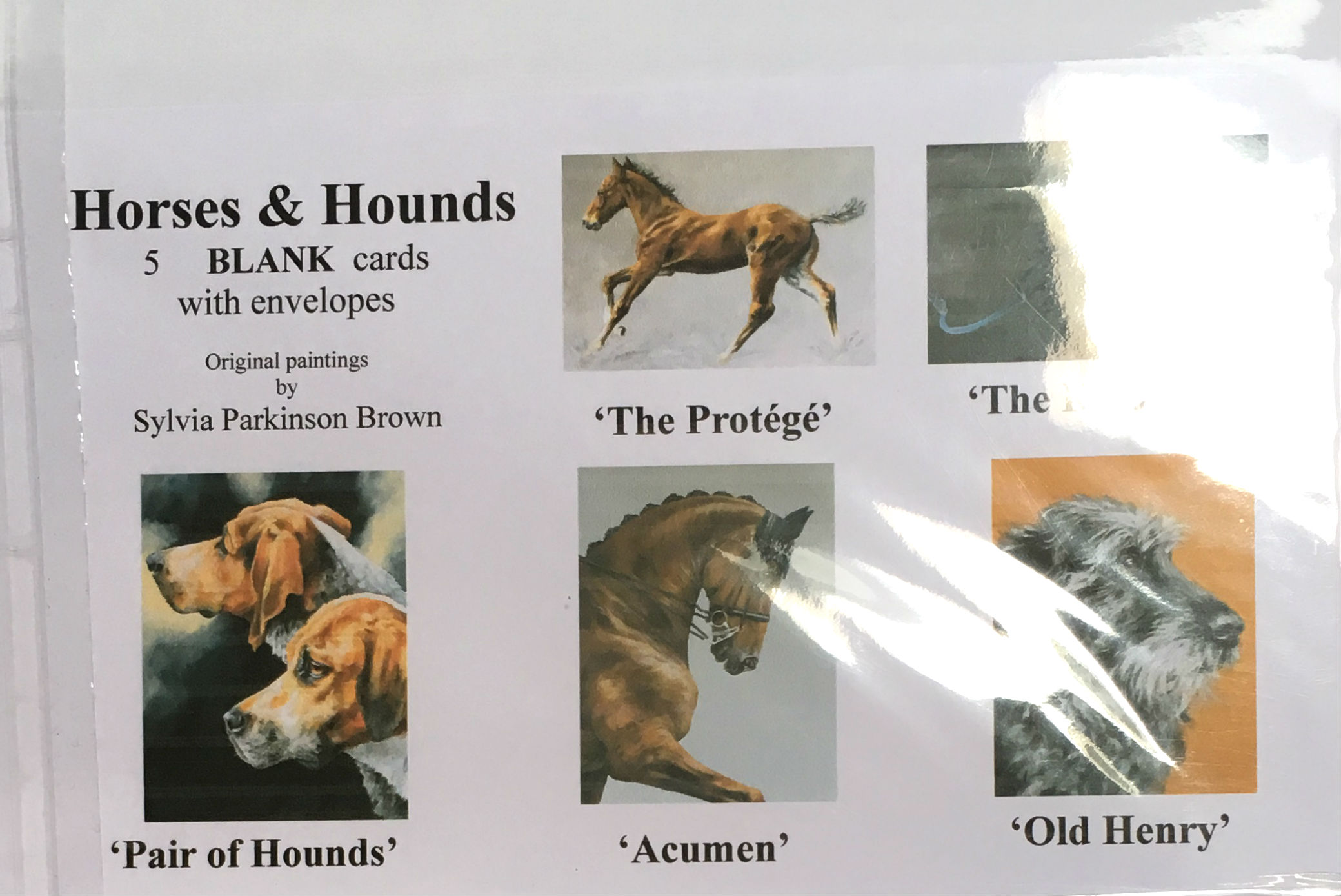 Animal Greeting Cards For All Occassions Kilkenny Spca