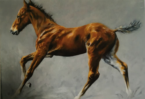 Horse Blank cards