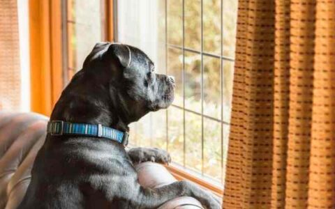 Life after lockdown - leaving your dog at home